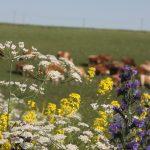Süt Ürünlerinde neden beslenX?